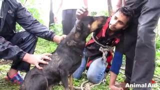 Собака заплакала, увидев спасателей