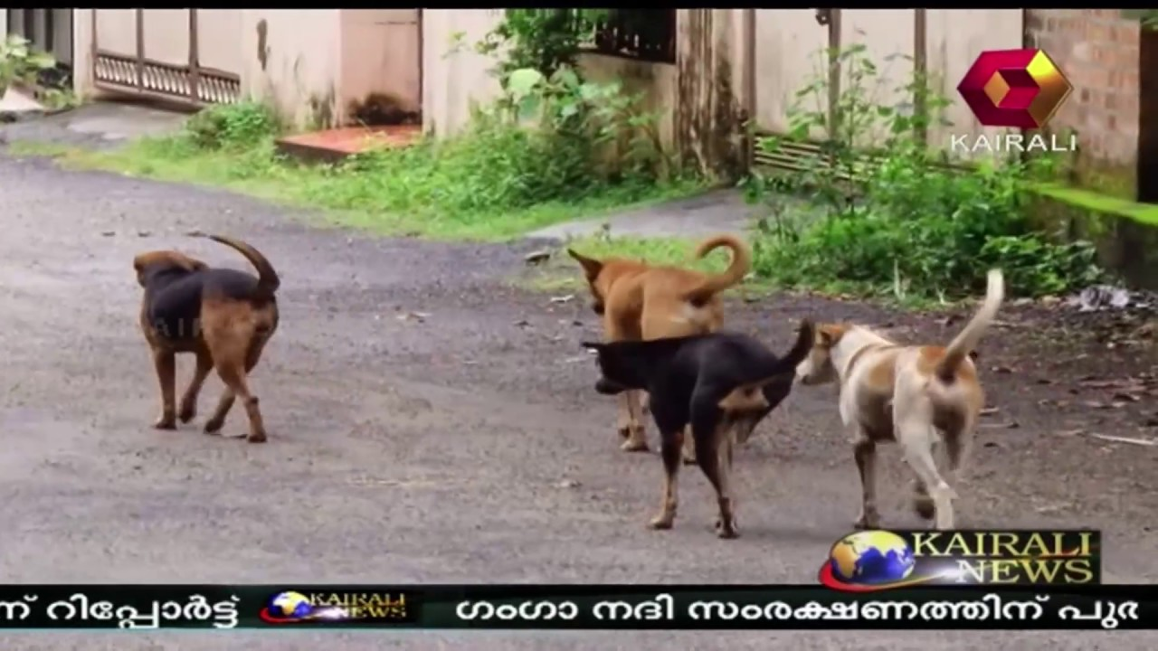 Supreme Court Issues Notice Against People Who Killed Stray Dogs