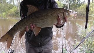 Lower Severn Autumn Barbel Fishing