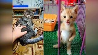 Лучшие приколы с животными 2019 #35 Смешные видео про кошек 2019, новые приколы с котами и кошками