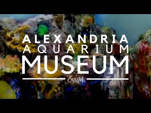 Aquarium Museum, Alexandria, Egypt - Things to do in Egypt. A Small Aquarium  with lots of Treasures