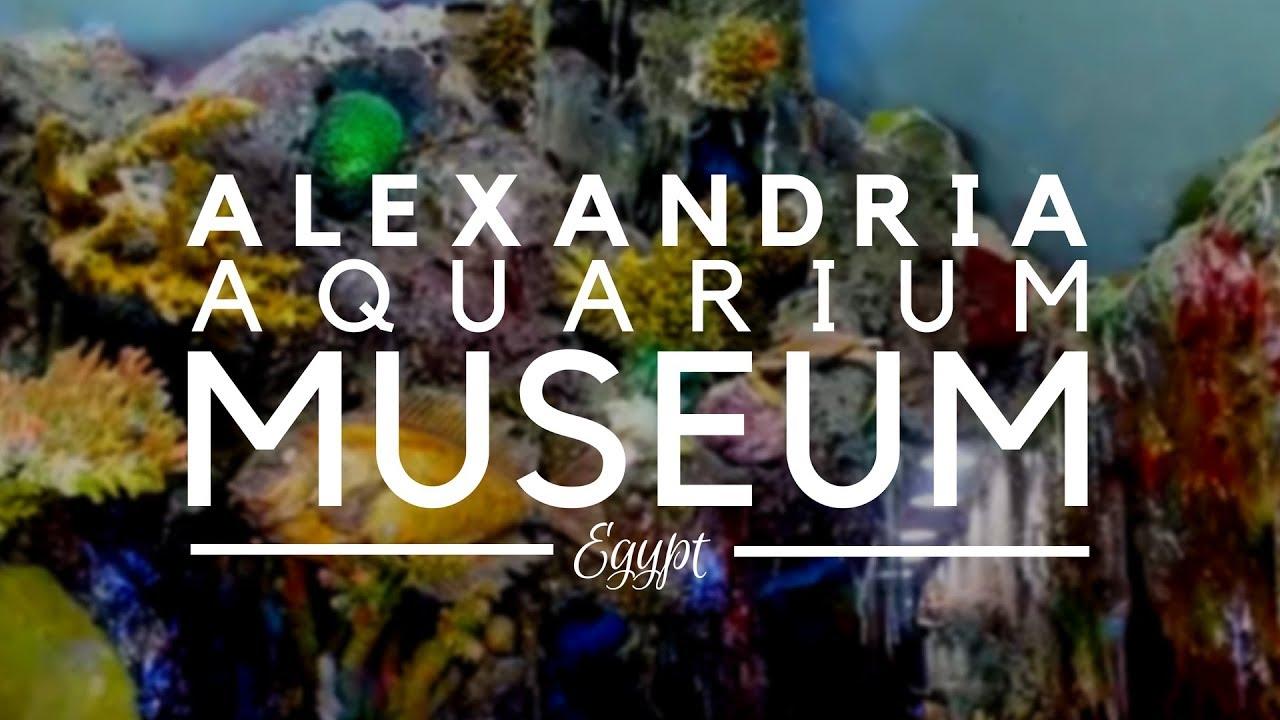 Aquarium Museum, Alexandria, Egypt - Small Treasure Aquarium