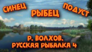 Синец рыбец подуст Рыбалка на реке Волхов Русская рыбалка 4 Фармим серебро