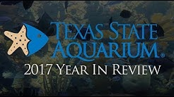 Texas State Aquarium's 2017 Year In Review