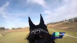 Dogs Eye View Of K9 Training Course