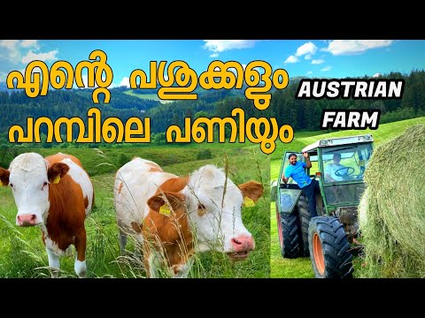 WORKING IN AUSTRIAN ORGANIC COW FARMIN JOB IN EUROPE AUSTRIA MALAYALAM VLOG 4K