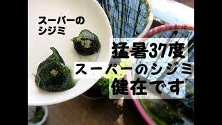 我が家は京都なんですが、地震、豪雨の後にこの猛暑が続いております。...