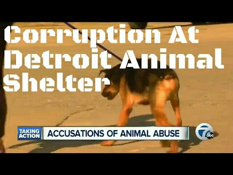 Corruption At Detroit Animal Control Shelter