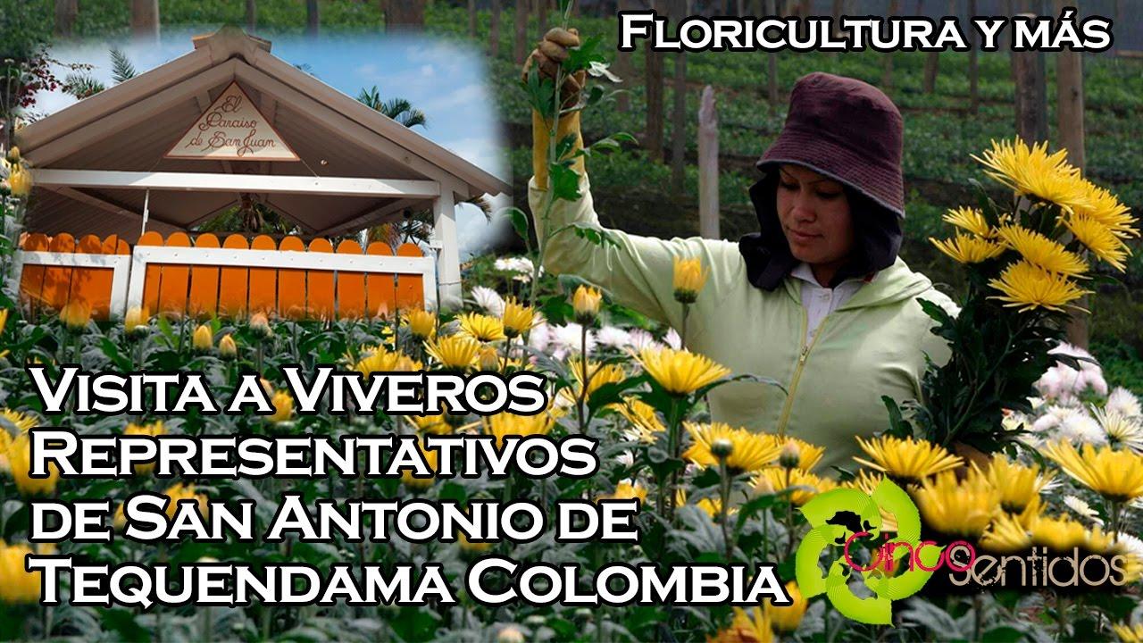 Viveros de plantas ornamentales en colombia youtube for Viveros plantas ornamentales colombia