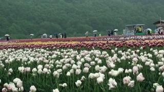 チューリップ公園(上湧別町)