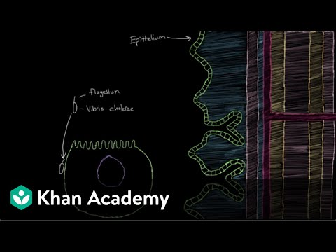 What is cholera? | Gastrointestinal system diseases | NCLEX-RN | Khan Academy