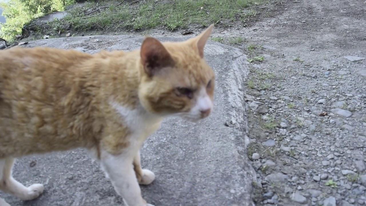 猫の動画、Cat movie