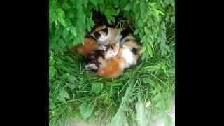 Заберите котят! Родились и живут во дворе!