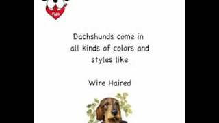 Best Dachshund Gifts For Dog Lovers