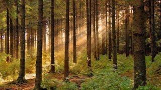 Как мораторий на продажу леса кругляка спасает деревообрабатывающую отрасль