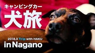 日本テリアのHAKUとキャンピングカーをレンタルして長野を旅してきまし...