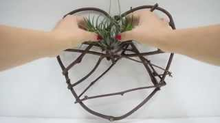 Diy: Plant A Dreamcatcher