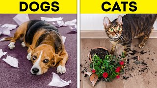 DOGS VS. CATS || Cute And Useful Pet Hacks And Gadgets That Will Make Your Life Easier