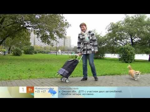 1 канал: как выбрать сумку-тележку