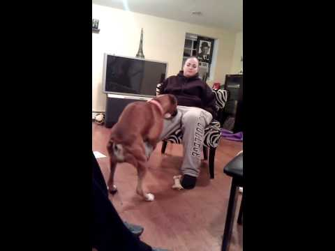 Girl let's honey the boxer dog hump her from YouTube · Duration:  3 minutes 10 seconds