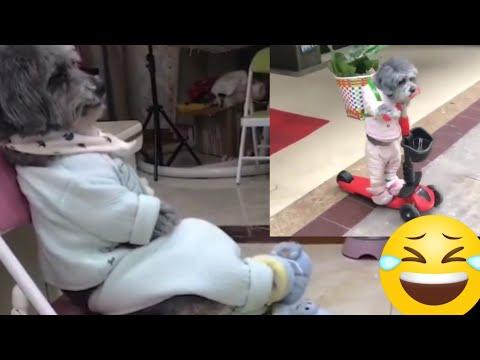 Amazing! Smart Dog walking two legs