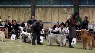 2010.01.30川越クラブ展、KING戦②.