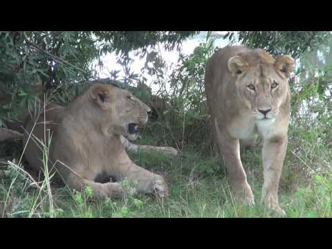 Africa 2012 Masai Mara and Serengeti