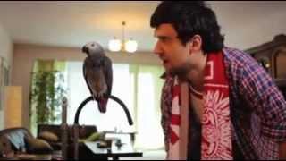 uczy papuga śpiewać polska biało czerwoni