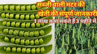 सब्जी वाली मटर की खेती Matar ki kheti