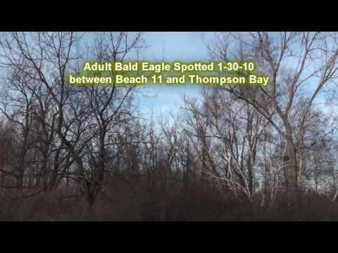 Bald Eagle at Presque Isle Jan 30, 2010