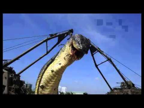 самая длинная в мире змея фото
