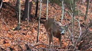 Where to Place Your Treestand for Deer Hunting