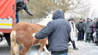 STOP Skaryszew - (wstępy) Targi końskie 2012r