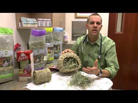 Adding Enrichment With Oxbow Hay