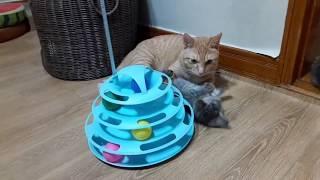 아기고양이 장난감가지고 잘놀아요
