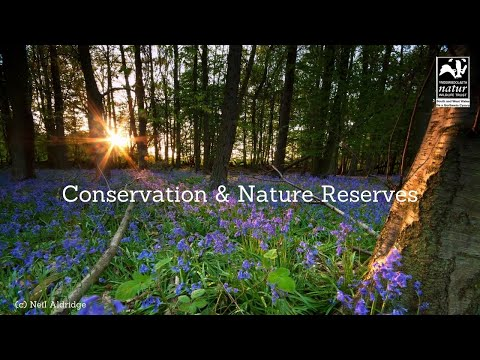 Taf Fechan Nature Reserve - a virtual tour