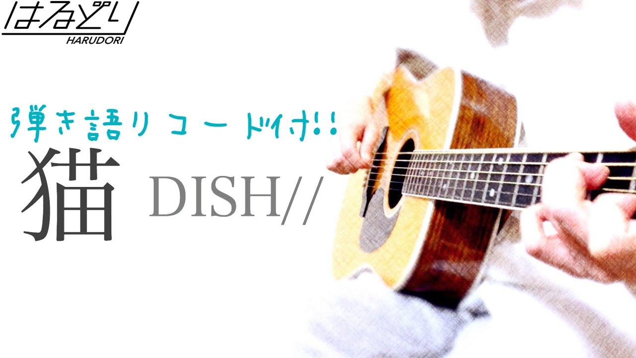 Dish コード 猫