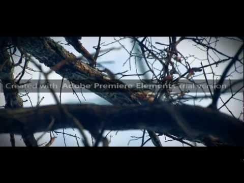 Adobe Premiere Elements 11 Trial Version Test