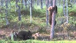 Karhunpennut - Bear Cubs