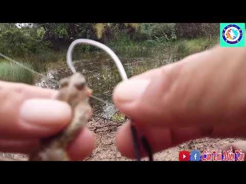 Kinh nghiệm câu cá lóc cho người mới || cách nhận biết chỗ có cá|Cần Thủ Miền tây