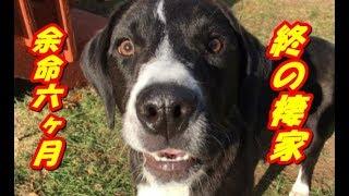 病気の為、数週間でシェルターに戻された犬。 そして、余命6ヶ月と宣告...