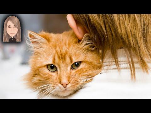 Вопрос: Какое имя лучше подойдет рыжему коту?