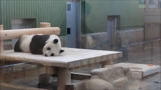 11時45分も寝てるパンダ 2021年7月25日