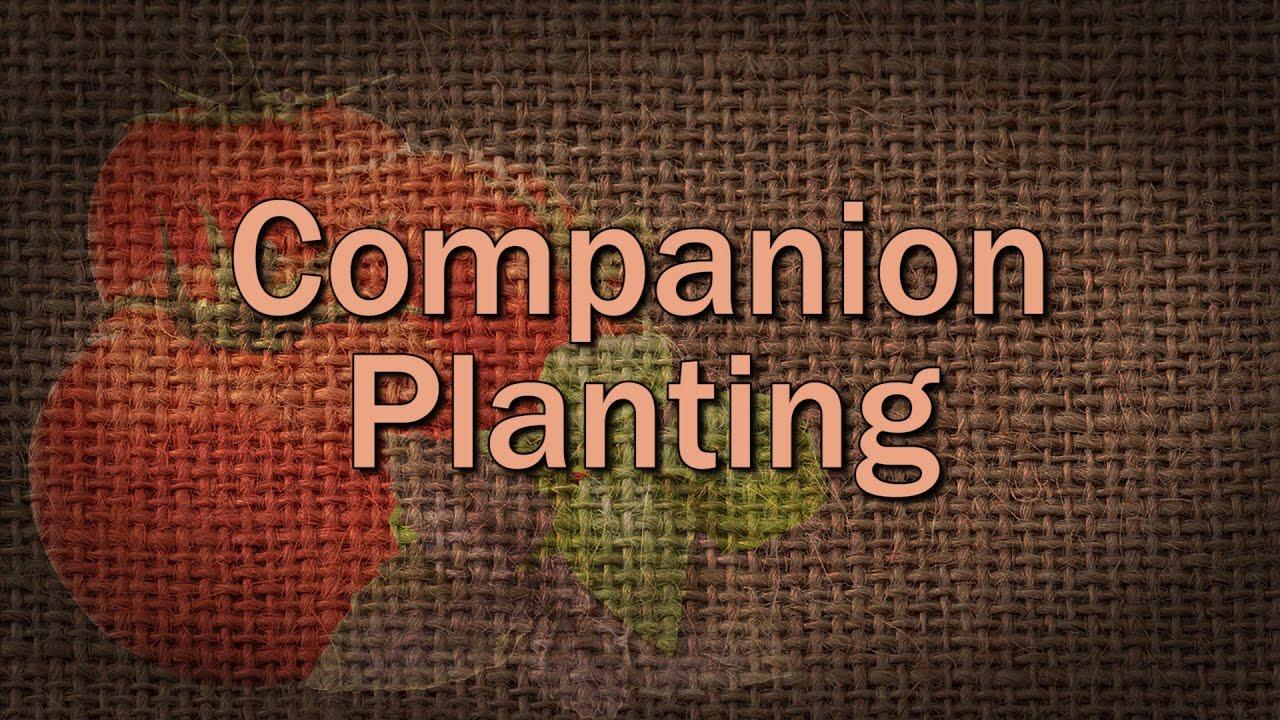 Companion Planting – Family Plot - YouTube