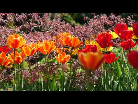 Spring Flowers in 4K UHD with Birds Tweeting - Beautiful Nature