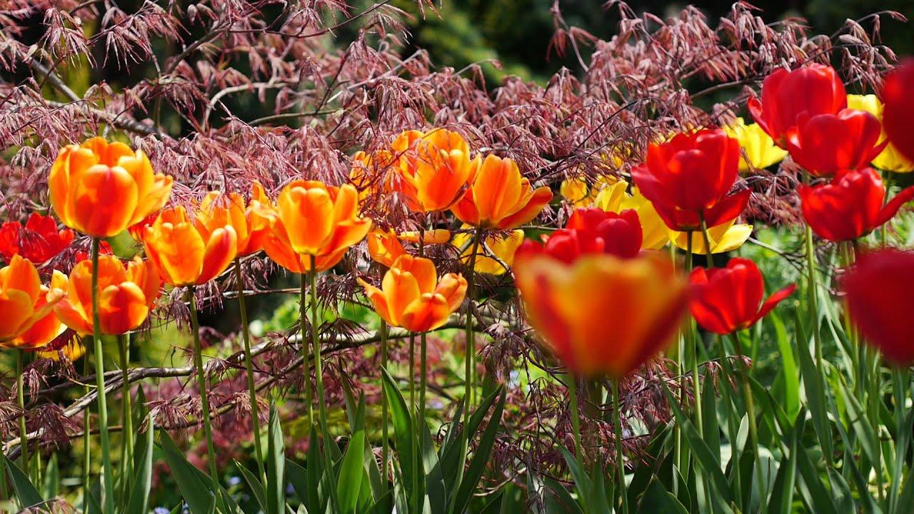 Fall Flowers Iphone Wallpaper Spring Flowers In 4k Uhd With Birds Tweeting Beautiful
