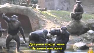 Муслим Султыгов - Ой, Мама Не Женюсь
