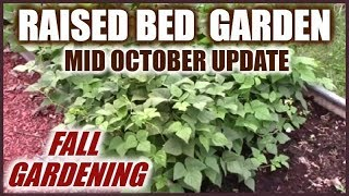 Raised Bed Garden | Raised Beds And Container Vegetable Gardening
