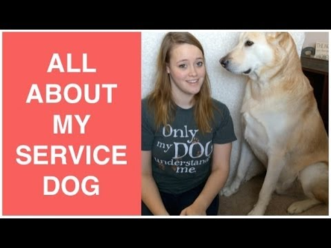 All About My Service Dog
