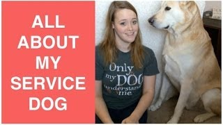 All About My Service Dog! | Sd Info